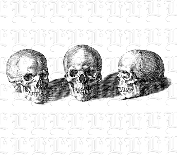 Antique Medical Anatomy Study Graphic Human Skulls in Three ...