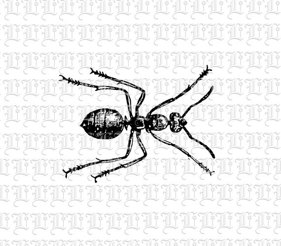 Black Ants in a Line Black Ant Line Drawing Vintage