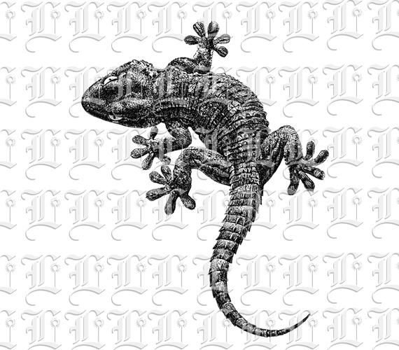 Cute Gecko Lizard Reptile Animal Vintage Illustration Clip Art Printable 300 Dpi Resolution