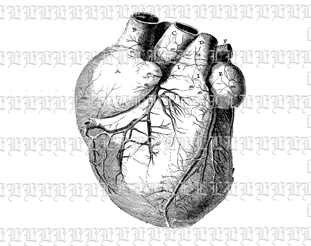 Anatomy Study Human Heart Medical Chart Vintage Clip Art