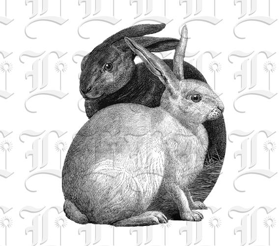 Vintage Rabbit Stock Vectors, Clipart and Illustrations